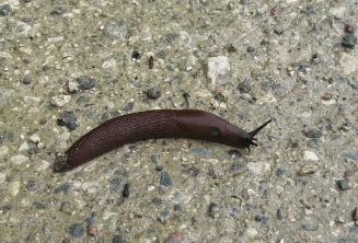 beeeg slug