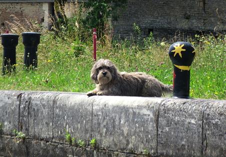 Village dog at Courcelles