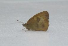 Calliope roof visitor