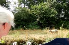 Lesley meets a sad sheep