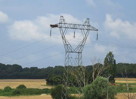 Stork nest building!