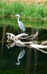 heron near Decize