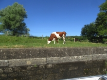 Grazing by lock 26