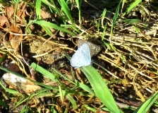 Butterfly at Germigny
