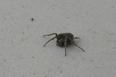 Spider at bay