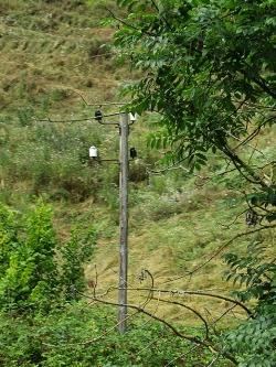 19xx telegragh pole