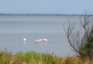 camargue_flamingoes_2