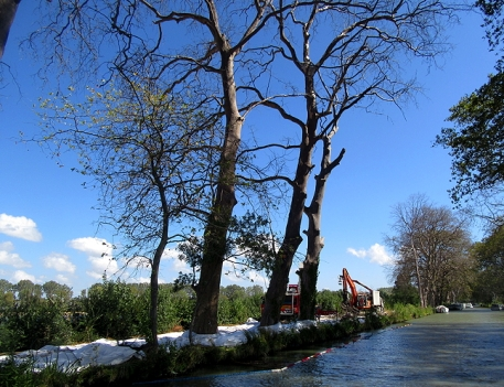 portiragnes__after__dead_trees_