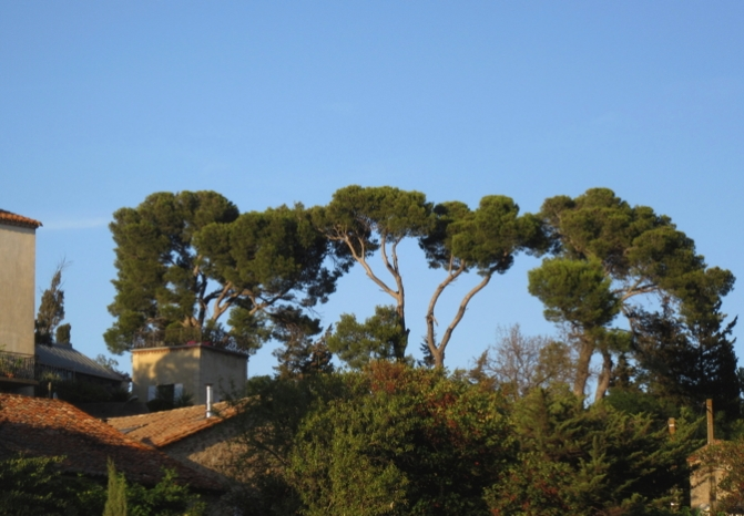 Trees above the mooring