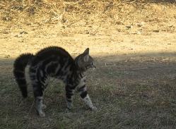 vias_cat_4