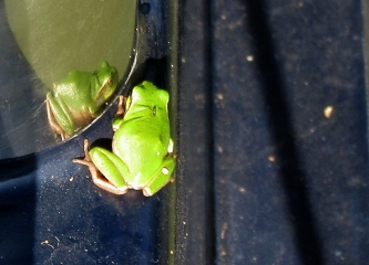 Stowaway meets his reflection