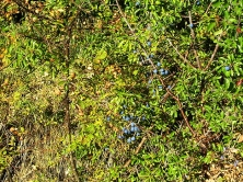 villesequelande_berries_2