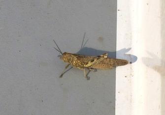 villesequelande_grasshopper