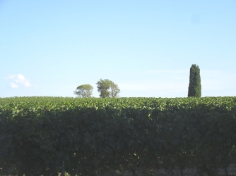 villesequelande_vines
