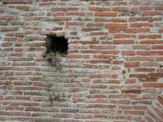 Nesting amongst the bricks