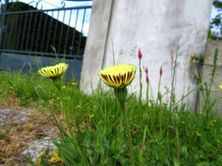grisolles_flowers_2