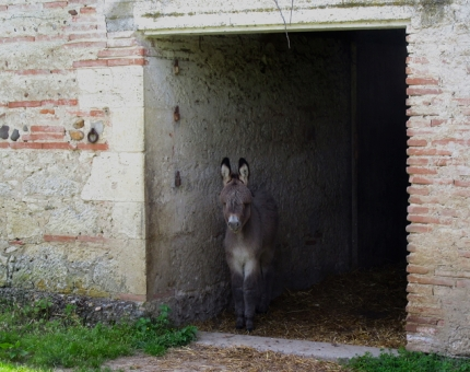lamagistere_mooring_donkey