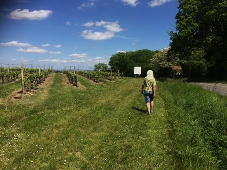 Yes, that's me, walking alongside the vineyard