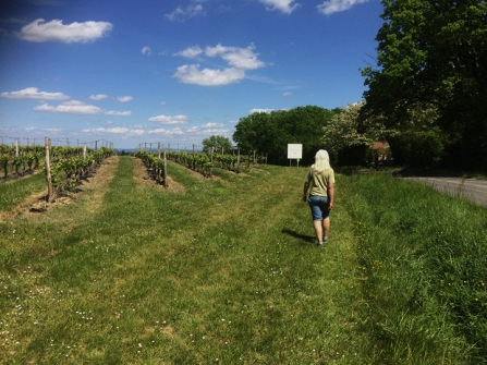 Yes, that's me, walking alongside the vineyard