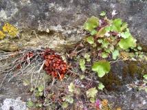 Le-Mas-d'Agenais beetles