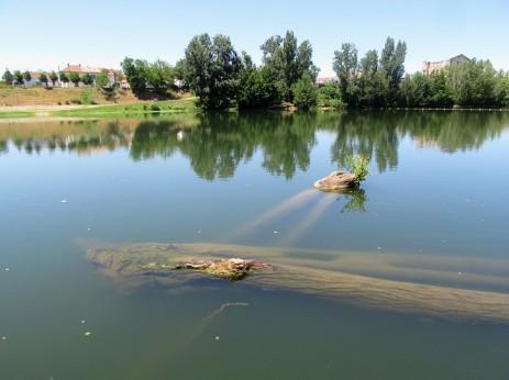 Sapiac logs at mooring
