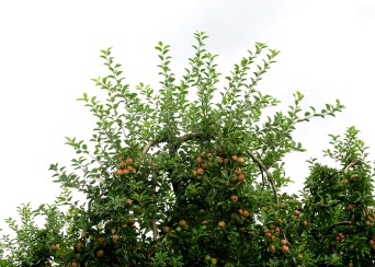 Corbarieu bike ride apples