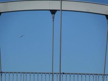 Distant purple heron in left 'window'