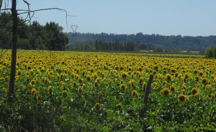 near St Porquier