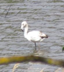 Pretty flamingo!