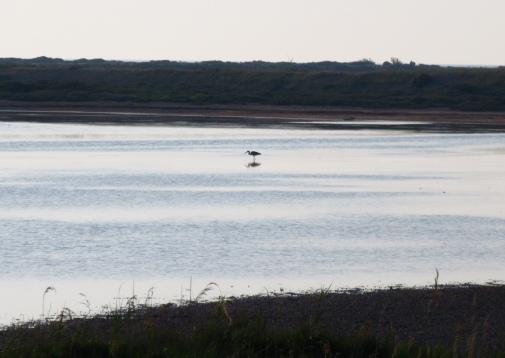 Morning heron